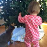 Toddler v. Christmas
